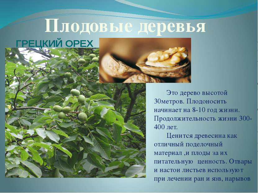 Плодовые деревья Это дерево высотой 30метров. Плодоносить начинает на 8-10 го...