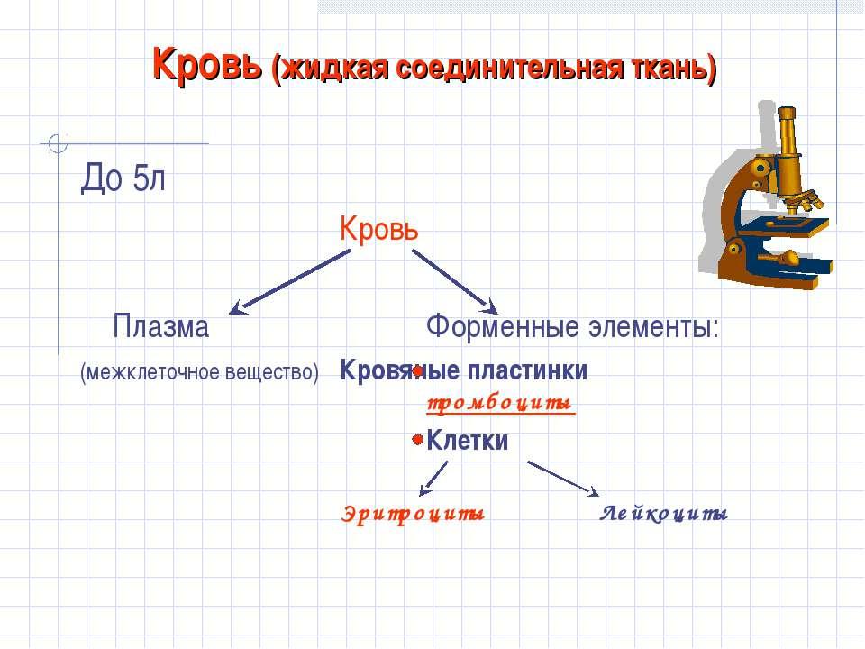 Кровь (жидкая соединительная ткань) До 5л Кровь Плазма Форменные элементы: (м...