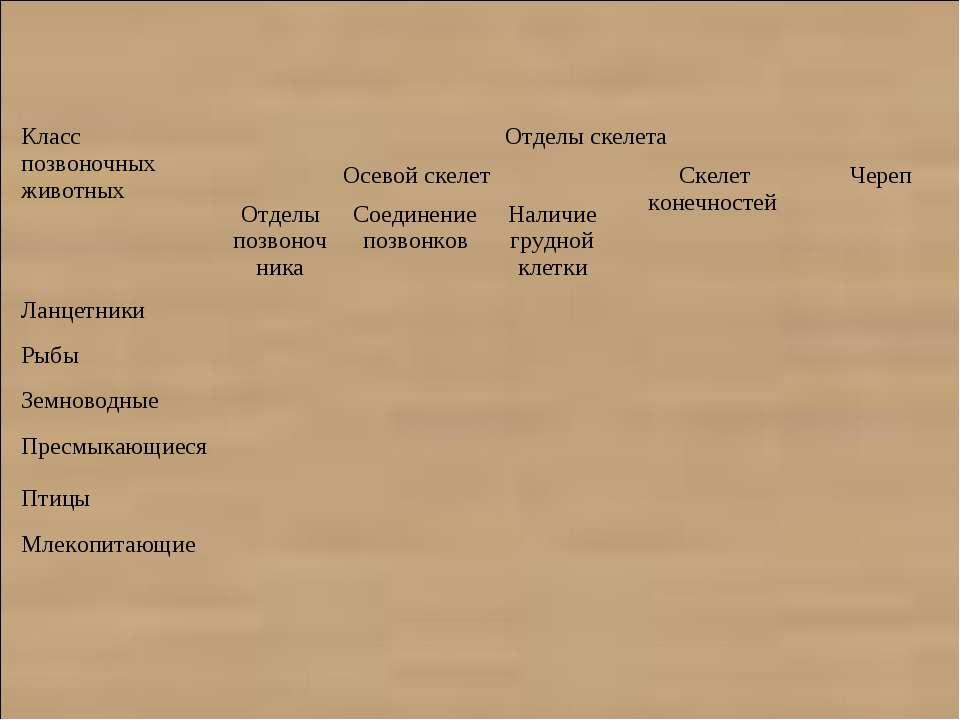 Класс позвоночных животных Отделы скелета Осевой скелет Скелет конечностей Че...