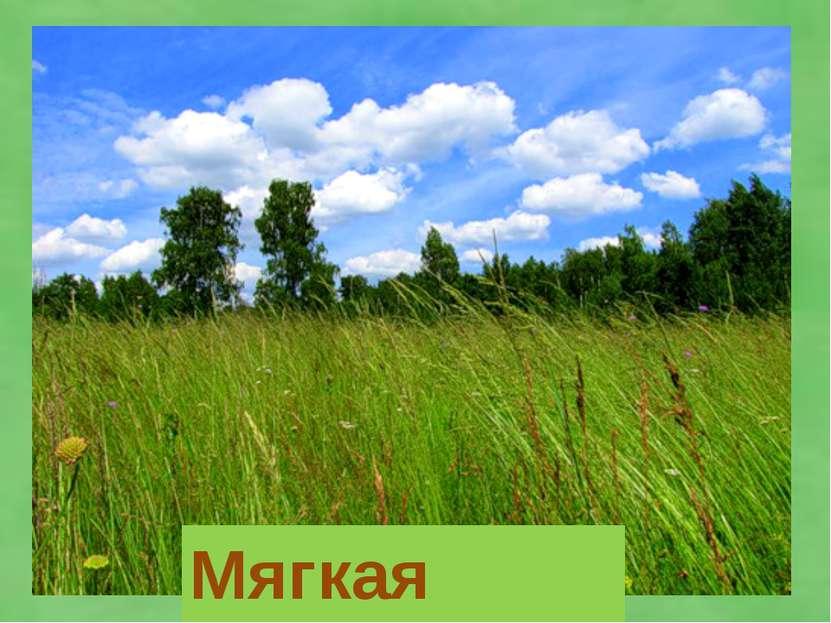 Мягкая трава,