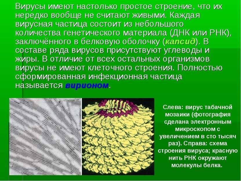 Вирусы имеют настолько простое строение, что их нередко вообще не считают жив...