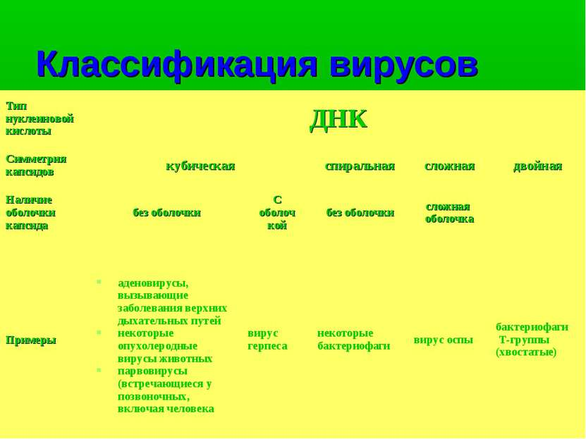 Классификация вирусов Тип нуклеиновой кислоты ДНК Симметрия капсидов кубическ...