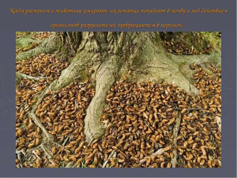 Когда растения и животные умирают, их остатки попадают в почву и под действие...
