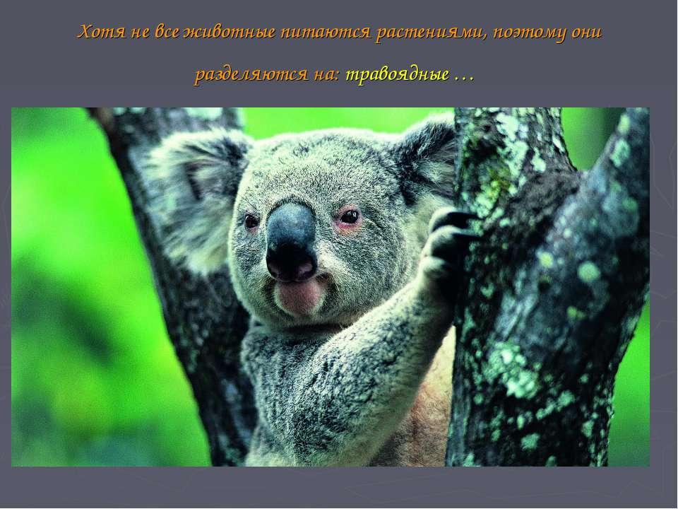 Хотя не все животные питаются растениями, поэтому они разделяются на: травояд...