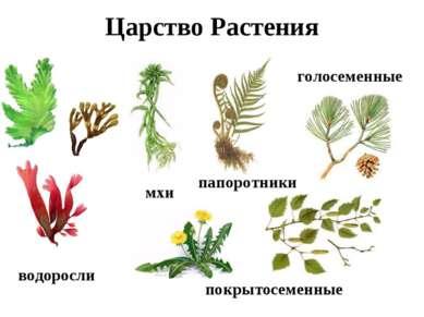Царство Растения водоросли мхи папоротники голосеменные покрытосеменные