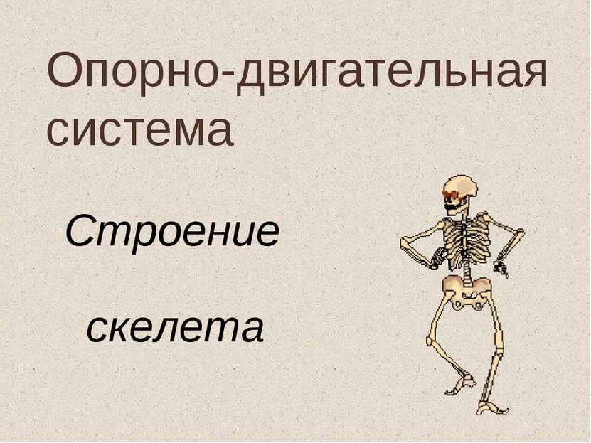 Опорно-двигательная система Строение скелета