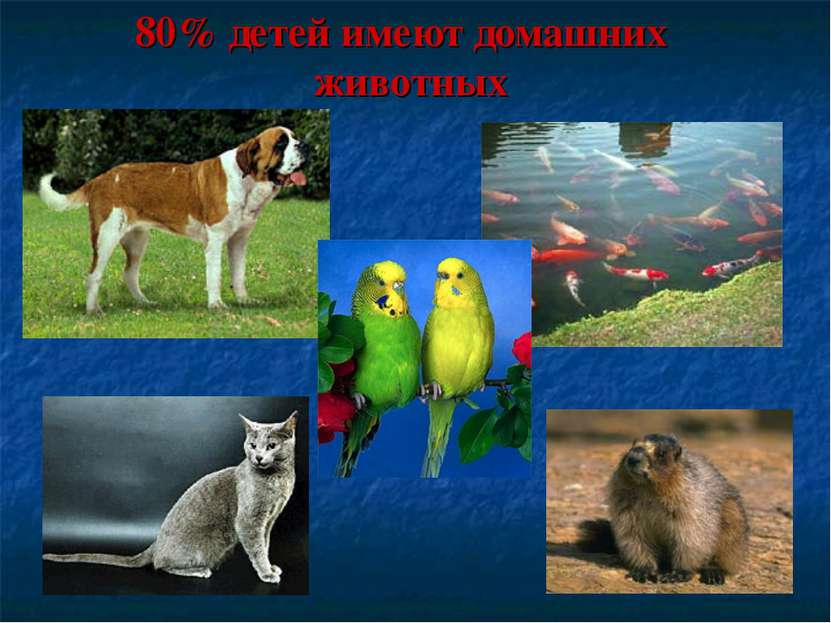 80% детей имеют домашних животных