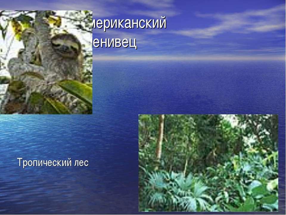Американский ленивец Р Тропический лес