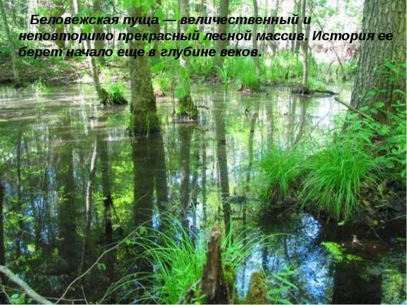 Беловежская пуща — величественный и неповторимо прекрасный лесной массив. Ист...