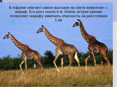 В Африке обитает самое высокое на свете животное — жираф. Его рост около 6 м....