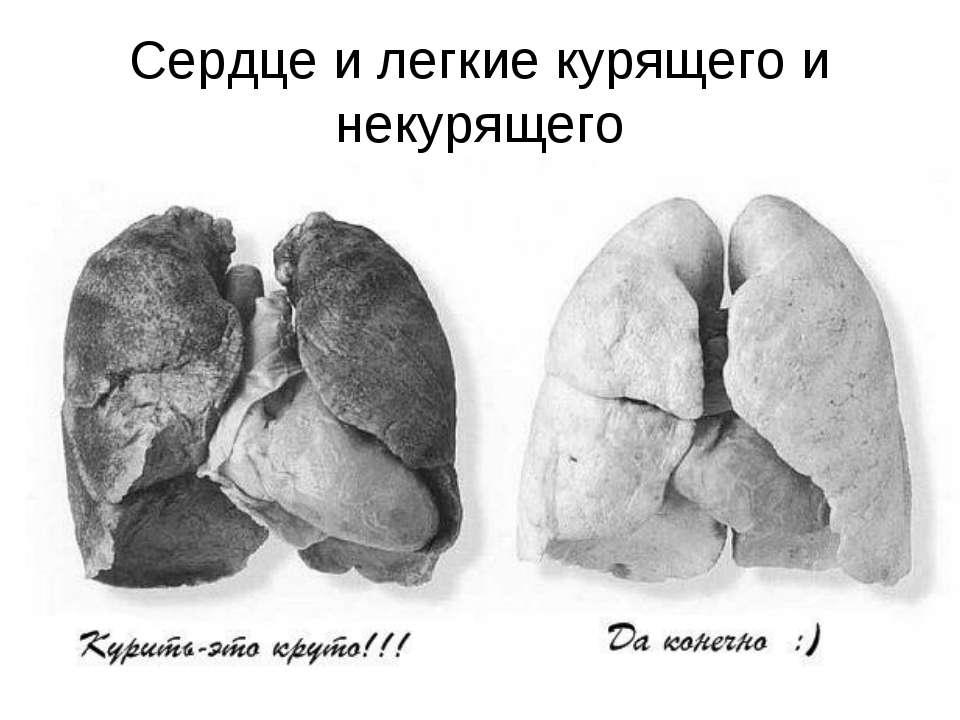 Сердце и легкие курящего и некурящего
