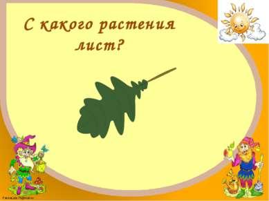Дуб FokinaLida.75@mail.ru