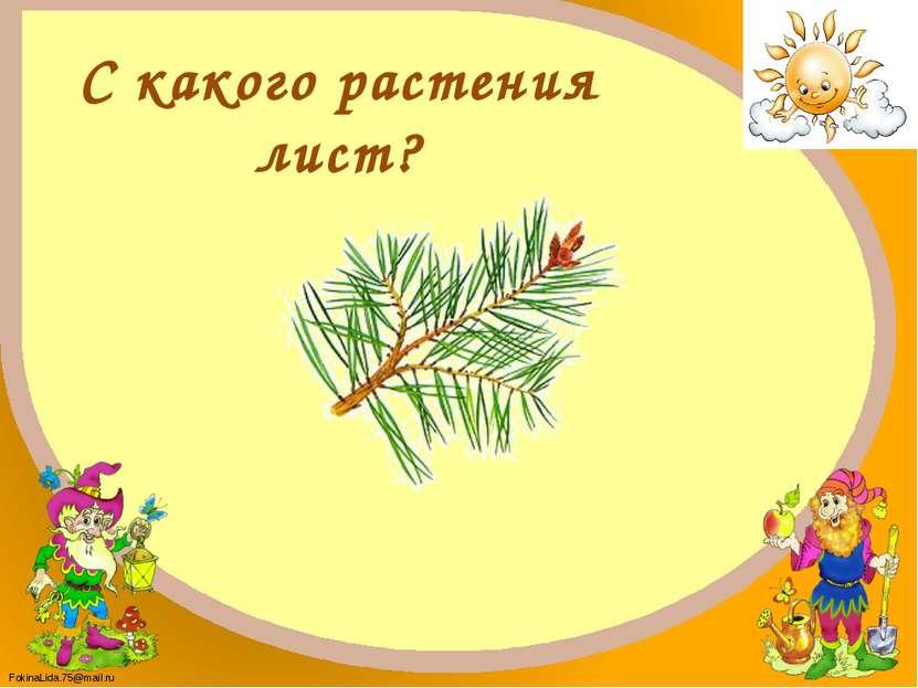 Сосна FokinaLida.75@mail.ru