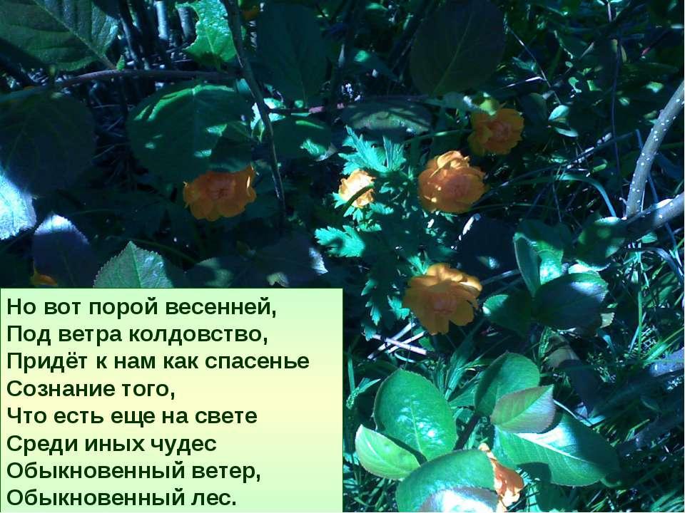 Но вот порой весенней, Под ветра колдовство, Придёт к нам как спасенье Сознан...