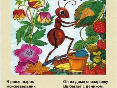 В роще вырос можжевельник, И в тени его ветвей Появился муравейник, Поселился...