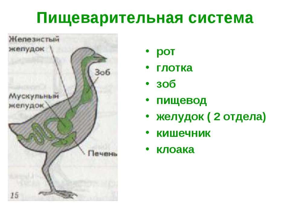 Поликлиника 14 тюмень детское регистратура
