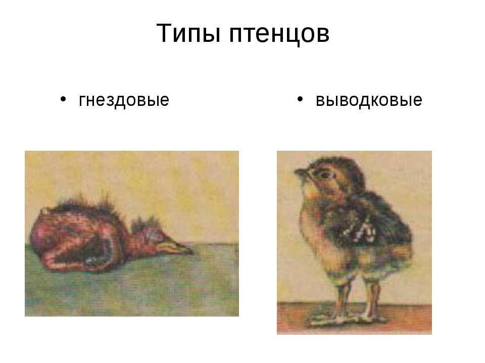Типы птенцов гнездовые выводковые