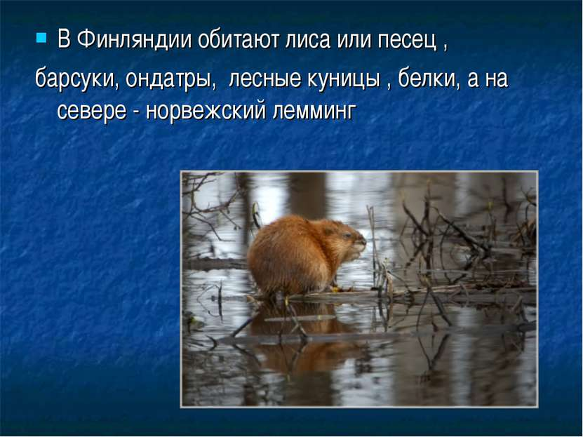 В Финляндии обитают лиса или песец , барсуки, ондатры, лесные куницы , белки,...