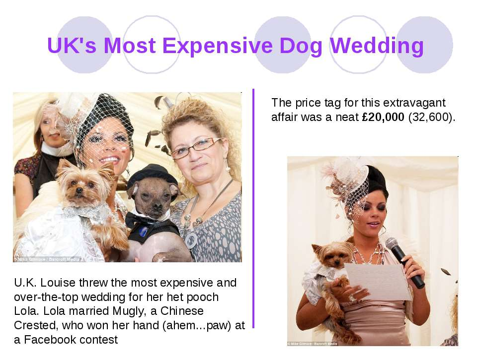 UK's Most Expensive Dog Wedding U.K. Louise threw the most expensive and over...