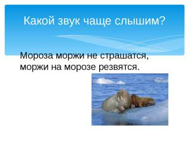 Мороза моржи не страшатся, моржи на морозе резвятся. Какой звук чаще слышим?