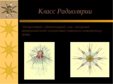 Класс Радиолярии Эти простейшие – обитатели морей, у них – внутренний минерал...