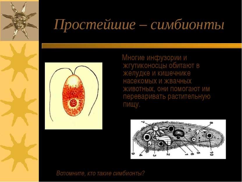 Простейшие – симбионты Многие инфузории и жгутиконосцы обитают в желудке и ки...