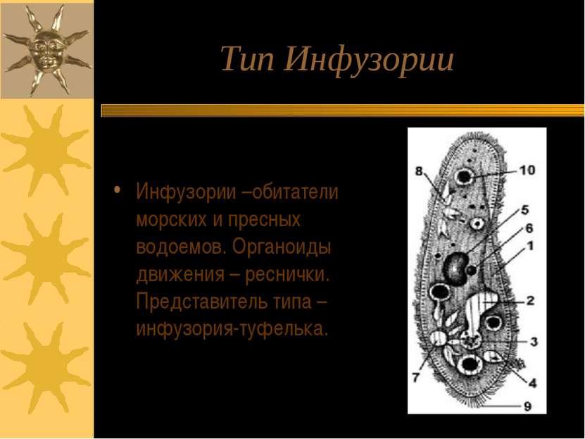 Тип Инфузории Инфузории –обитатели морских и пресных водоемов. Органоиды движ...