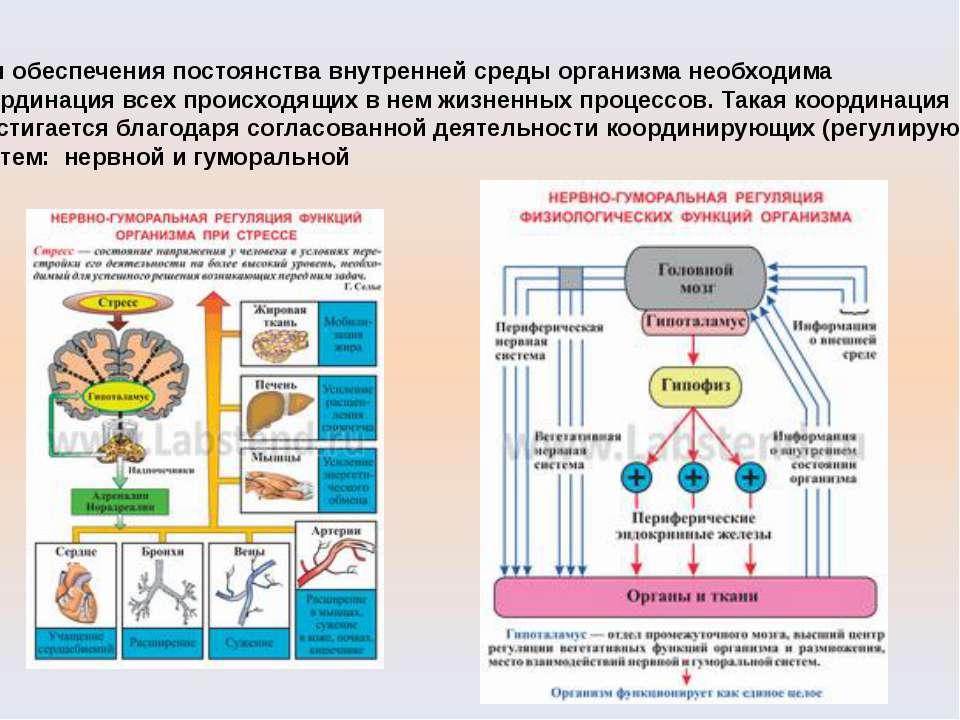 Для обеспечения постоянства внутренней среды организма необходима координация...