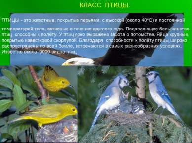 КЛАСС ПТИЦЫ. ПТИЦЫ - это животные, покрытые перьями, с высокой (около 40*С) и...