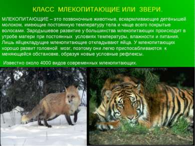 КЛАСС МЛЕКОПИТАЮЩИЕ ИЛИ ЗВЕРИ. МЛЕКОПИТАЮЩИЕ – это позвоночные животные, вска...