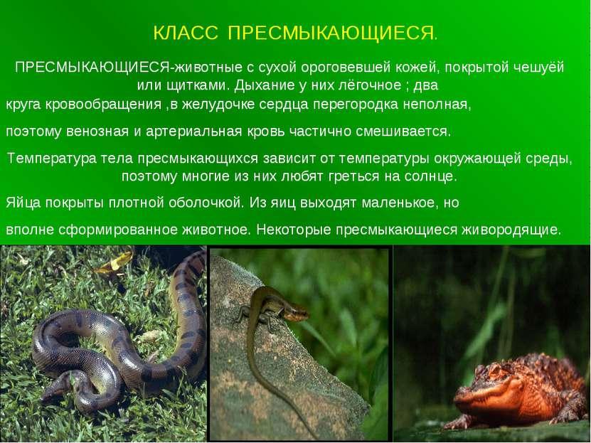 КЛАСС ПРЕСМЫКАЮЩИЕСЯ. ПРЕСМЫКАЮЩИЕСЯ-животные с сухой ороговевшей кожей, покр...