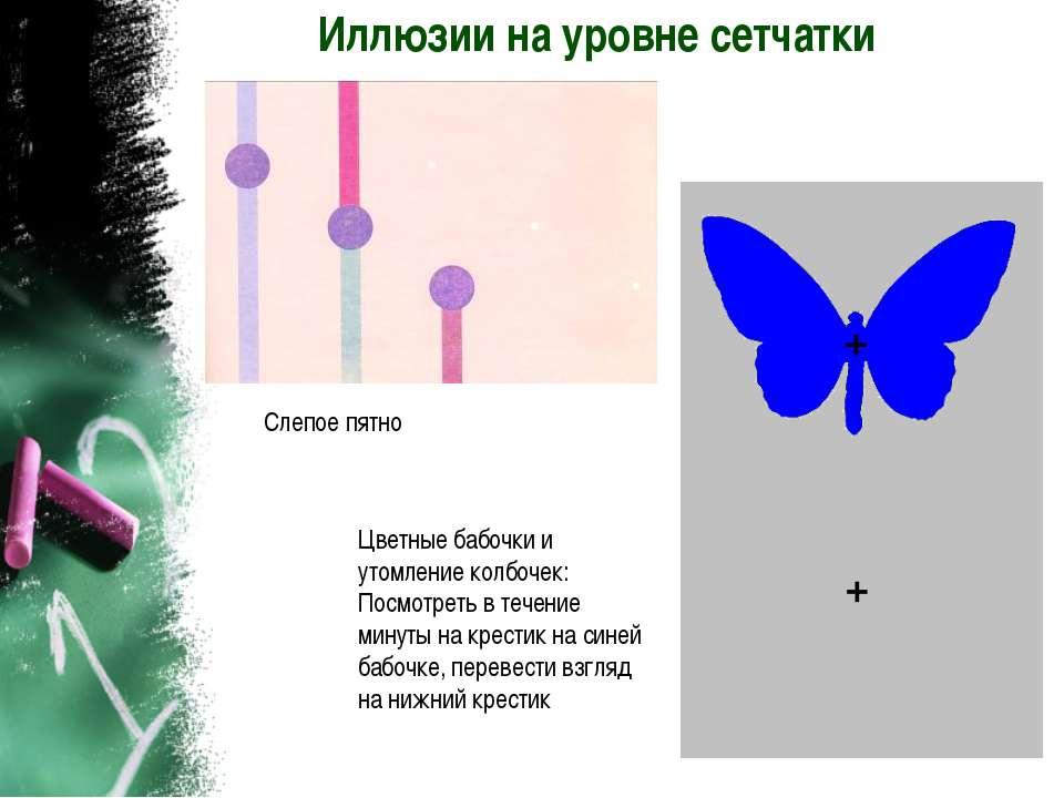 Иллюзии на уровне сетчатки Слепое пятно Цветные бабочки и утомление колбочек:...