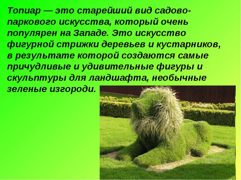 Топиар — это старейший вид садово-паркового искусства, который очень популяре...