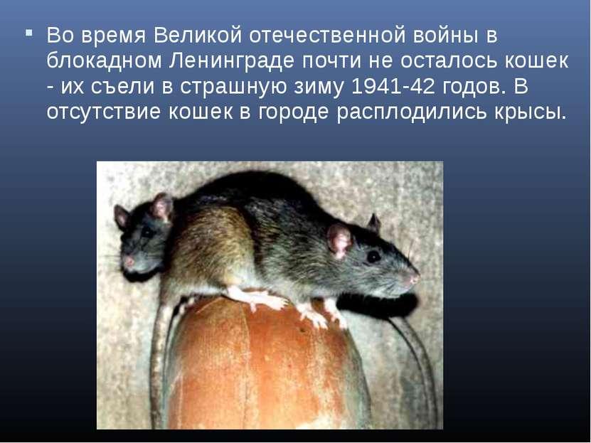 Во время Великой отечественной войны в блокадном Ленинграде почти не осталось...