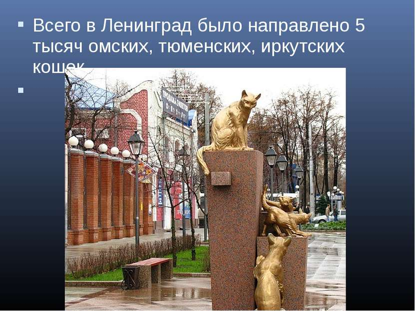 Всего в Ленинград было направлено 5 тысяч омских, тюменских, иркутских кошек.