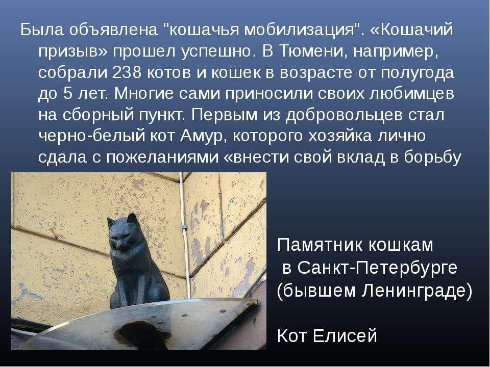 """Была объявлена """"кошачья мобилизация"""". «Кошачий призыв» прошел успешно. В Тюме..."""