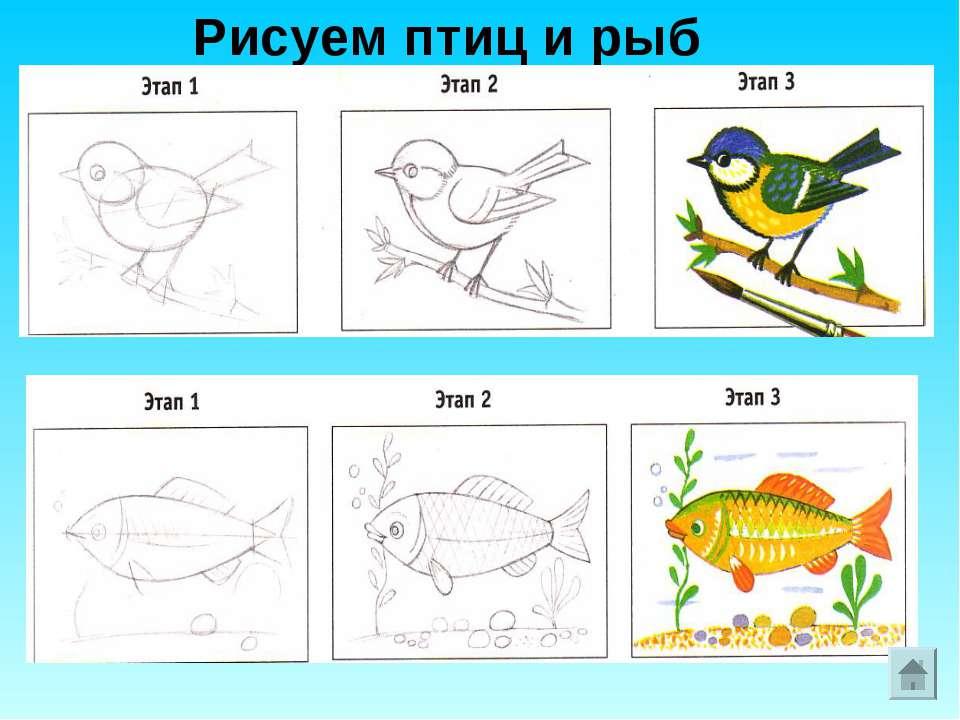 Рисуем птиц и рыб