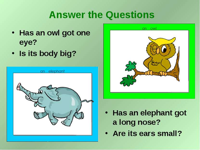 Has an owl got one eye? Is its body big? Has an elephant got a long nose? Are...