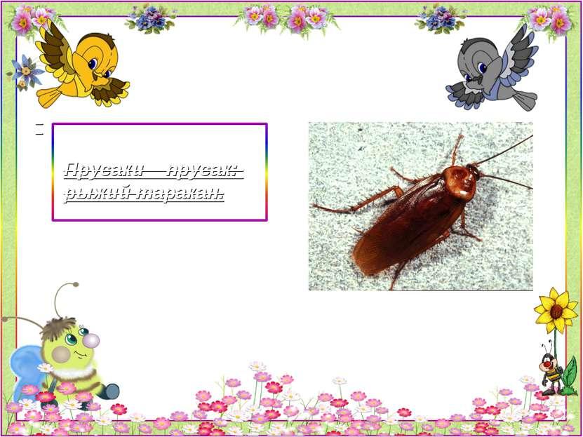 Прусаки – прусак: рыжий таракан.