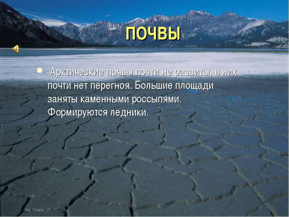 ПОЧВЫ Арктические почвы почти не развиты, в них почти нет перегноя. Большие п...