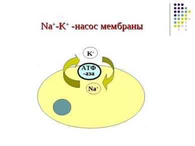 Na+-K+ -насос мембраны Na+ K+ АТФ -аза