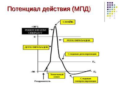 Потенциал действия (МПД)