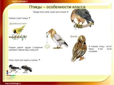 Птицы – особенности класса