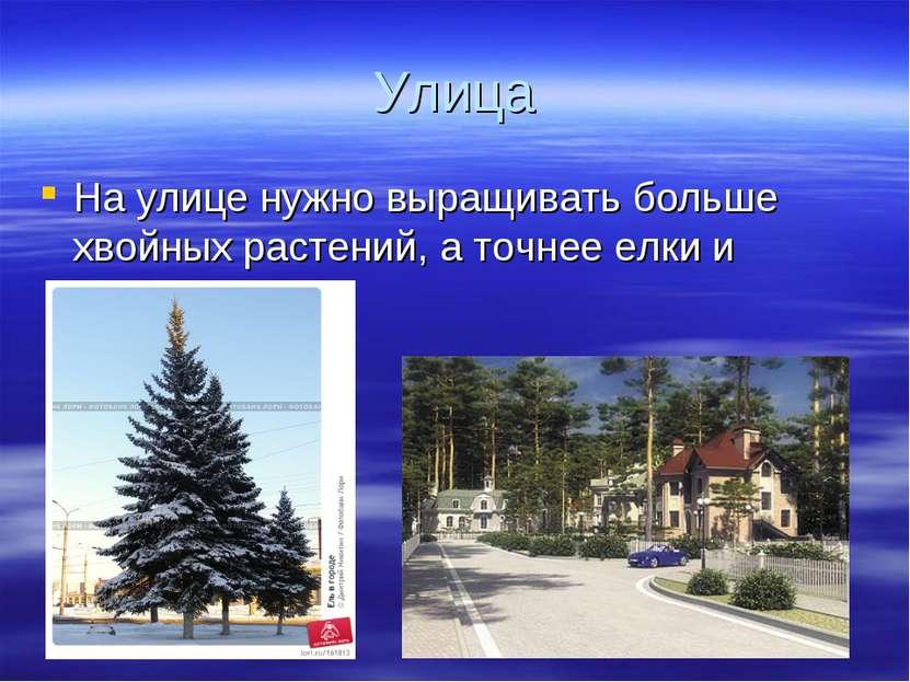 Улица На улице нужно выращивать больше хвойных растений, а точнее елки и сосны.