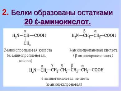 2. Белки образованы остатками 20 έ-аминокислот.