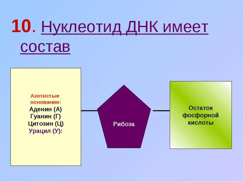 10. Нуклеотид ДНК имеет состав