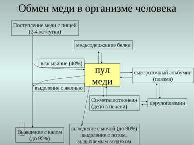 Обмен меди в организме человека Поступление меди с пищей (2-4 мг/сутки) Вывед...