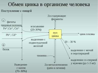 Поступление с пищей Выведение с калом (70- 80%) всасывание (20-30%) Обмен цин...