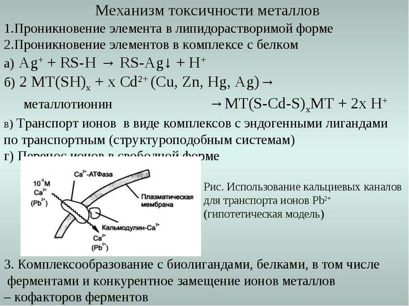 Механизм токсичности металлов 1.Проникновение элемента в липидорастворимой фо...