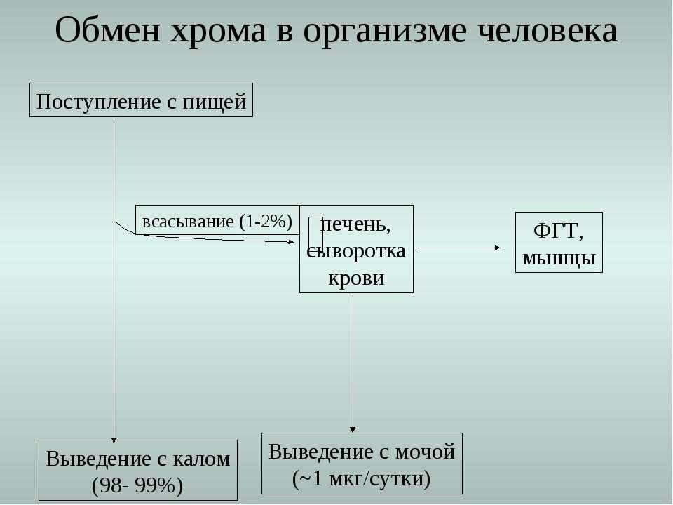 Поступление с пищей Выведение с калом (98- 99%) всасывание (1-2%) Обмен хрома...